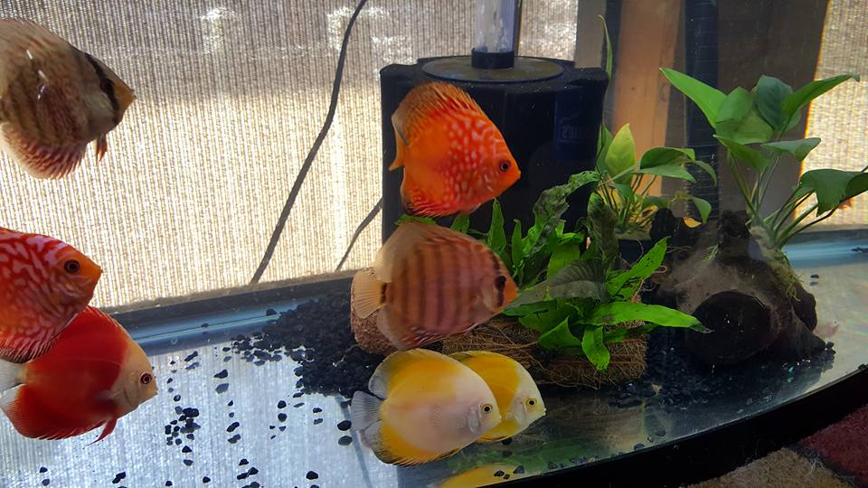 Absolutely Beautiful fish,,, love everyone I\'ve gotten.  Picture by Rose Buckelew.