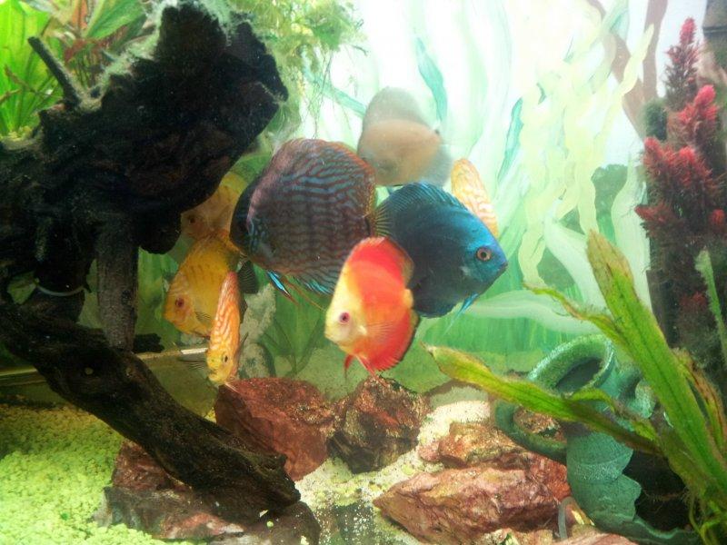 Discus Aquarium by Robert Grenkowitz