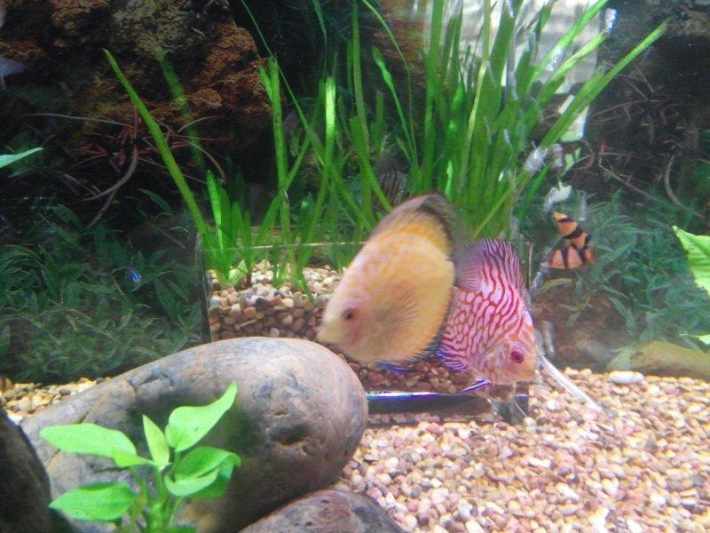 Eastman Aquarium