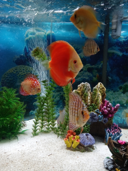 Picture and Aquarium by Steven Agent