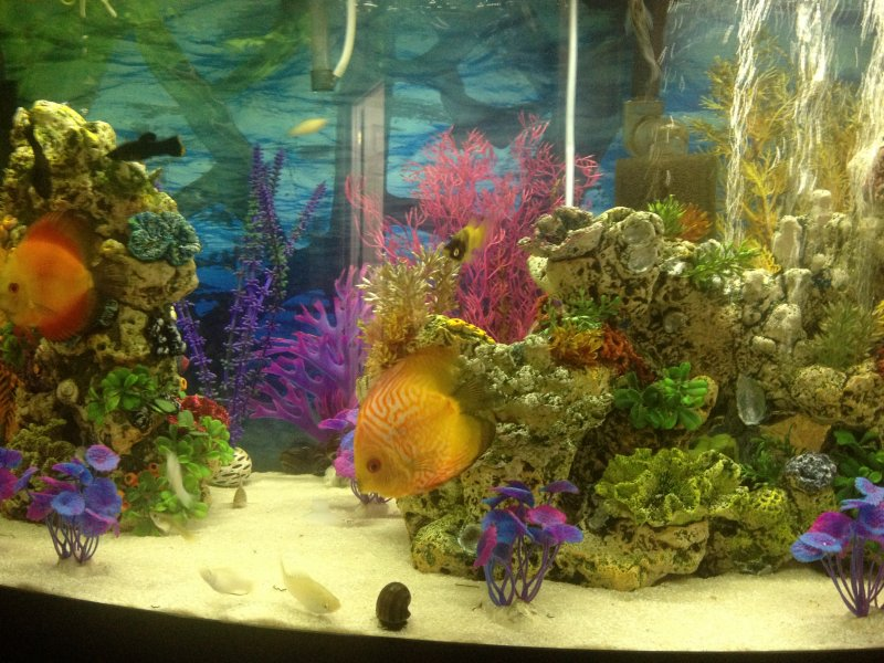 My Aquarium by Janet Irizarry