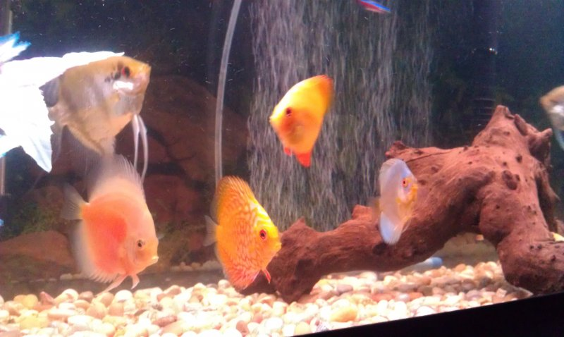 4 of the discus we have by Desiree Stone