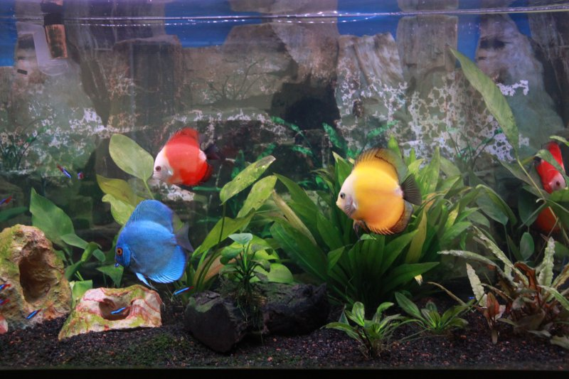 Discus in 75g by William George