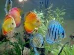 aquarium-by-amanda-leisten-56309634dd0b7424cfca5e58105ab8f23509519b
