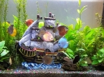 demaris-gonzalez-aquarium-picture