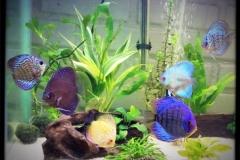 kimberly-montoney-aquarium-99869daa6a19717f8cc7fcdd0ef17e3406b27eff
