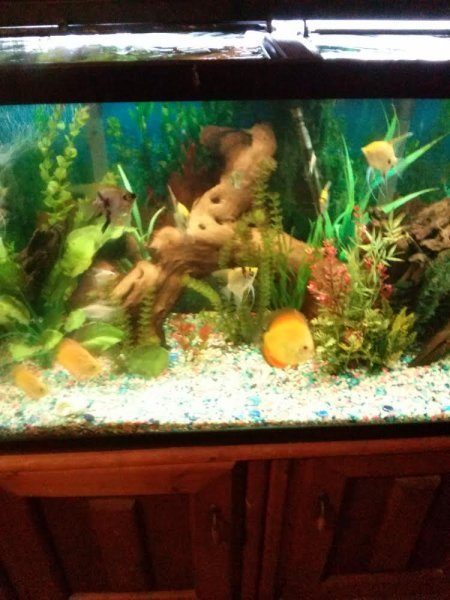 My 90 gallon Discus and Angel tank by Billy Robbins